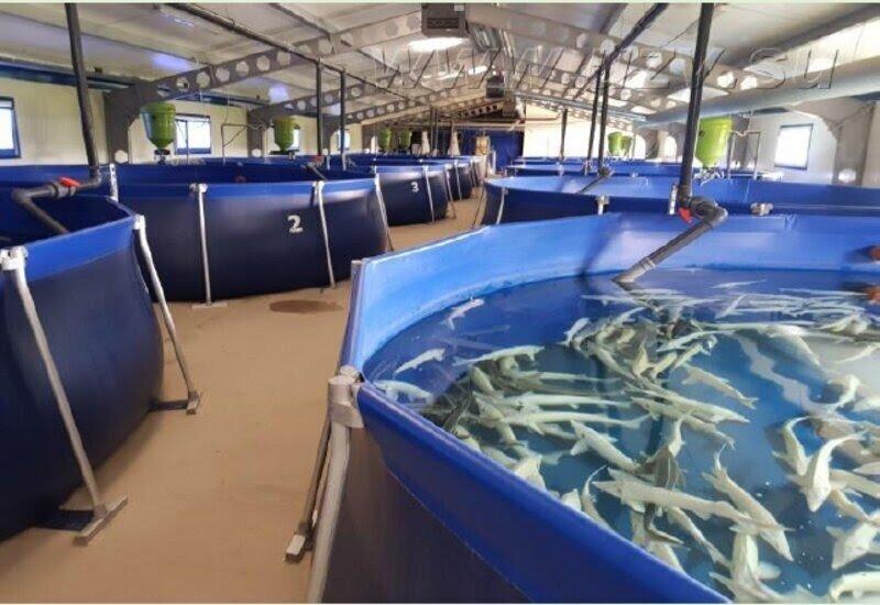 Aquaculture Mart sarl
